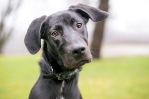 Lab Mix Feature