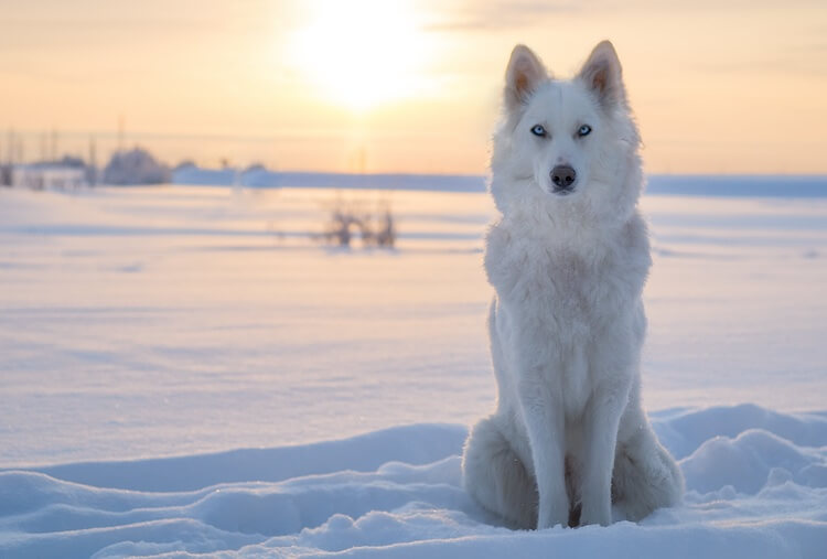 Wolf Dog Names White