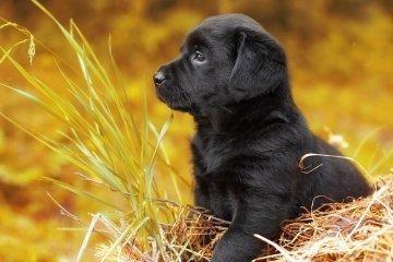 200+ Popular Black Dog Names