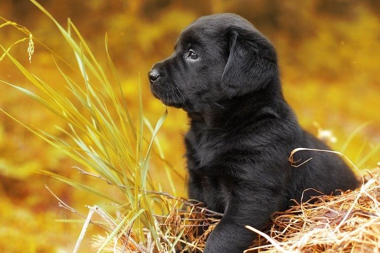 300+ Popular Black Dog Names