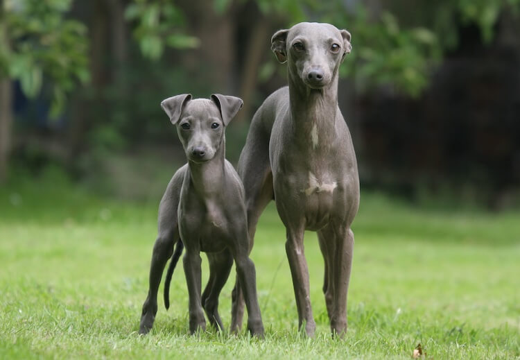 Dogs That Don't Shed