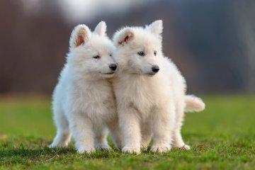 300 White Dog Names for Fluffy Snow-White Dogs