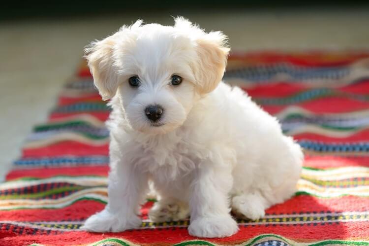 White Dog Cute