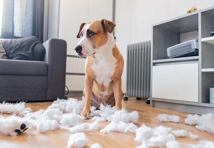Destroyed Dog Toy