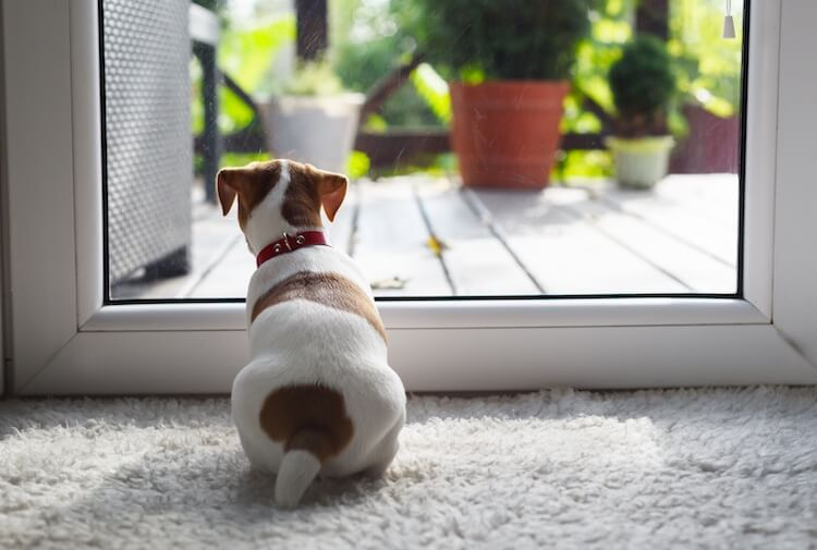 Puppy Watching Outside