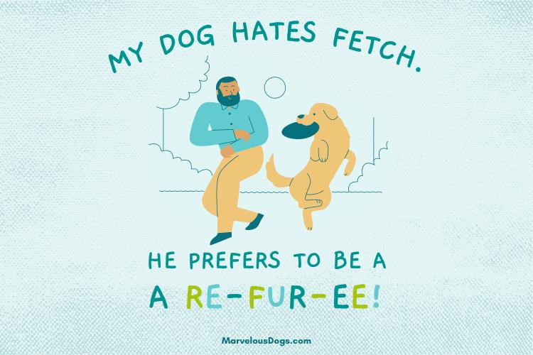 Dog Fetch