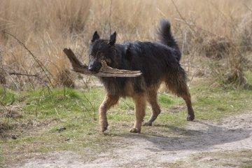 Top 20 Best German Shepherd Mixes