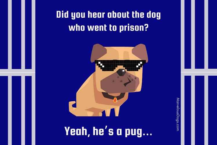 Pug dog puns